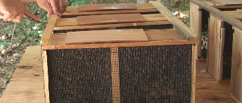 Packages of Honey Bees